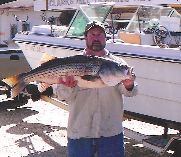 Fishing state records for georgia and south carolina moon for Clarks hill lake fishing report