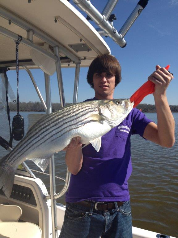 Clarks hill thurmond lake and lake murry lodging marinas for Clarks hill fishing report